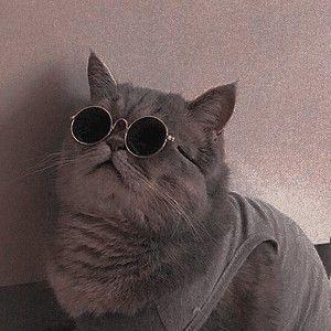 Trollingcat