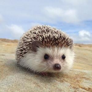 SneakyHedgehog